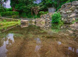 妙見神社の池